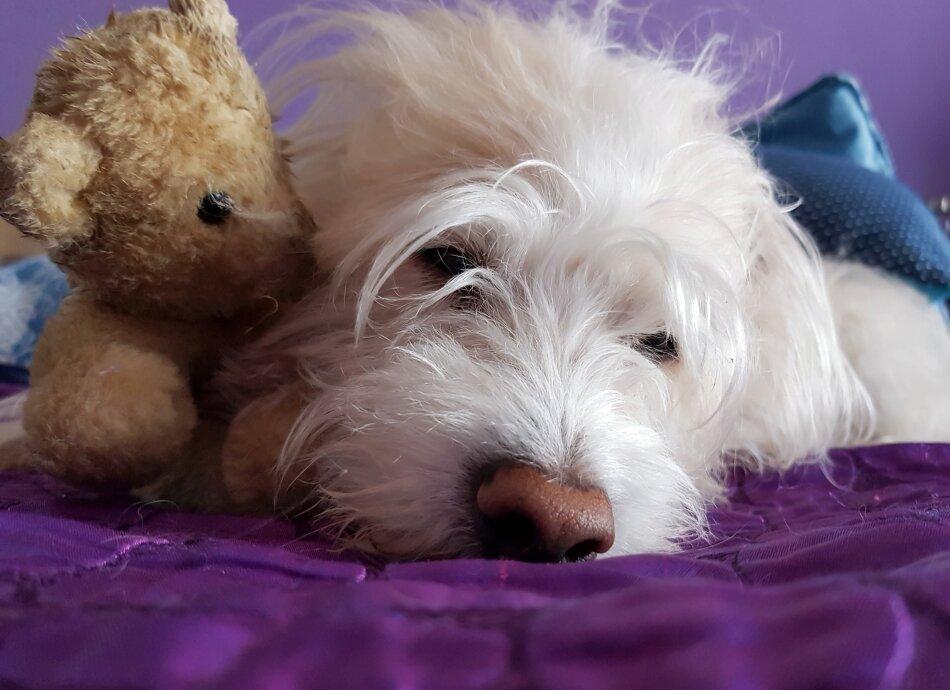 איך נוכחות הכלב בחדר תורמת לשינה