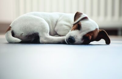בנאדם תן לכלב לישון