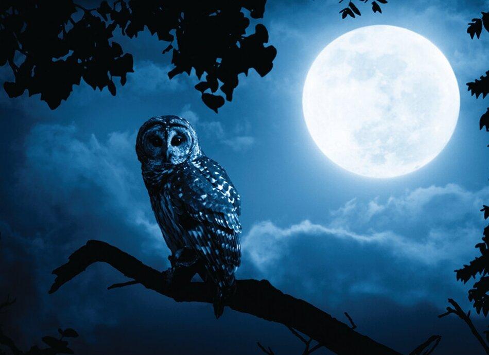ינשופי לילה זה בשבילכם