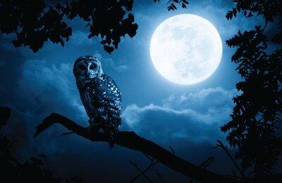 ינשופי לילה זה בשבילכם פורום שינה