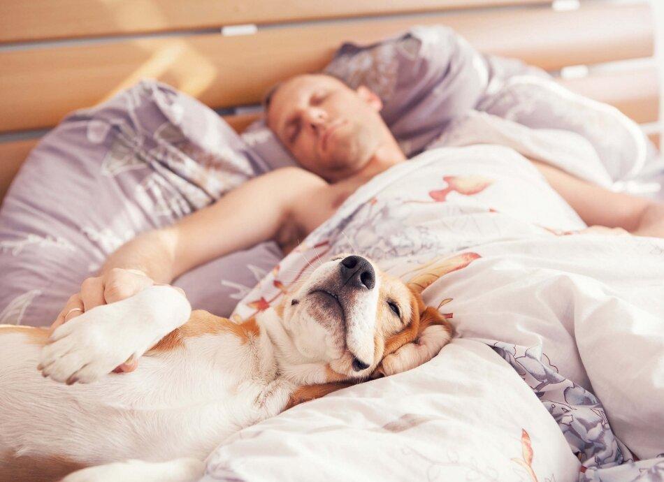 ישנים עם ידידינו הטובים מאמר