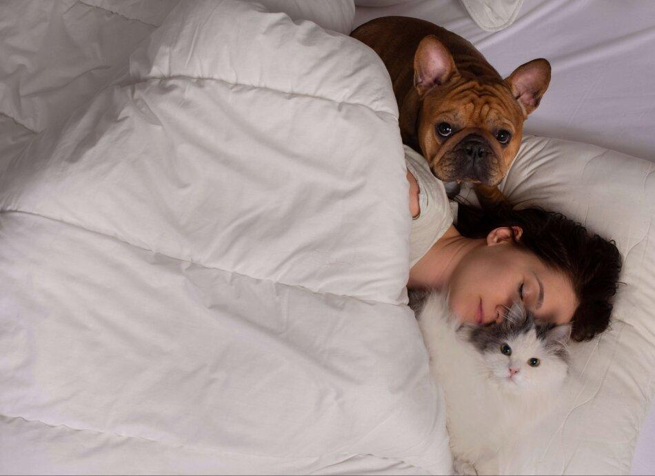 ישנים עם ידידינו הטובים מאמר פורום שינה