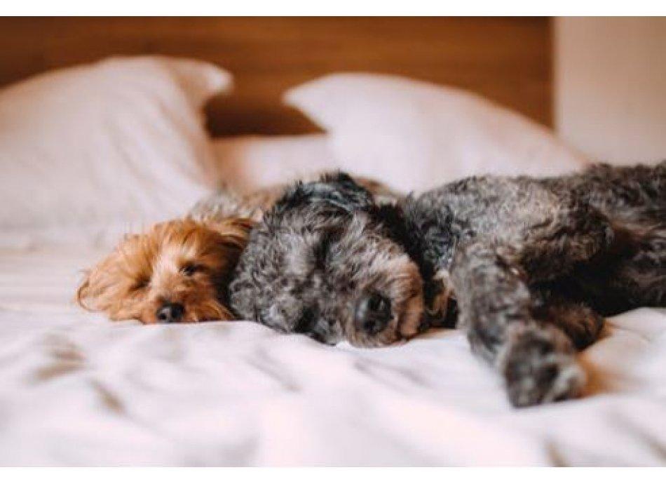 תנוחות שינה אחרות ומה הן אומרות