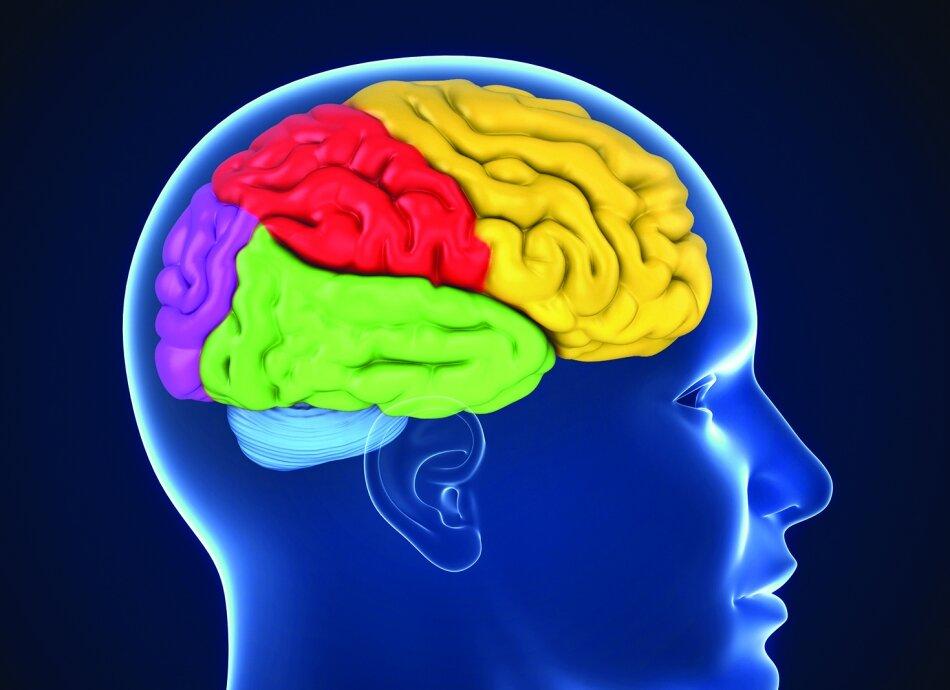 תרגילי שינה לשיפור הזיכרון מאמר
